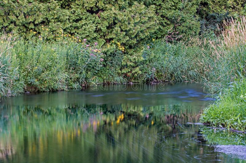Riverbank Plants Reflected In The Waters Of The Credit River. Wild riverbank plants and flowers are reflected in the waters of the Credit River in Ontario stock image