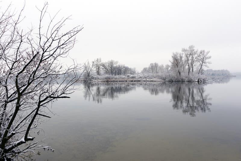 Riverbank tranquilo con las cañas y los árboles en el invierno imagen de archivo