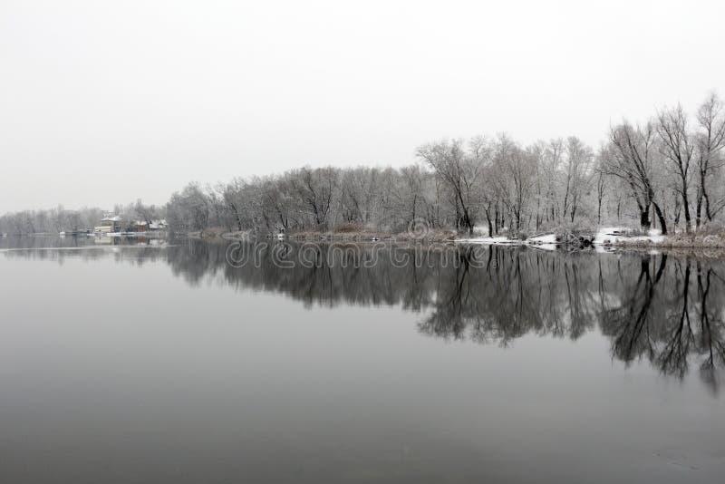 Riverbank tranquilo con las cañas y los árboles en el invierno fotografía de archivo