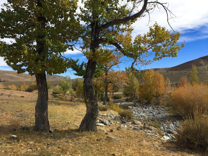 Riverbank w jesień kolorach Stepowa rzeka altai Rosja obrazy royalty free