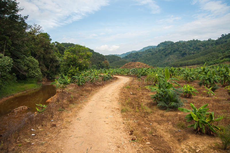Riverbed with low water and a country road in the rain forest of Khao Sok sanctuary. Landscape with riverbed with low water nand a country road, the rain forest royalty free stock photos