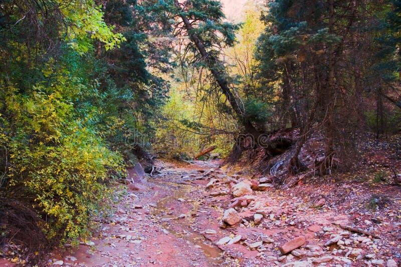 Riverbed secado no parque nacional de Zion fotografia de stock royalty free