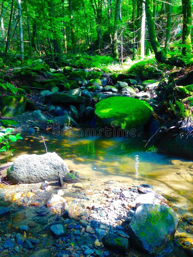 The Rivers Grove royalty free stock images