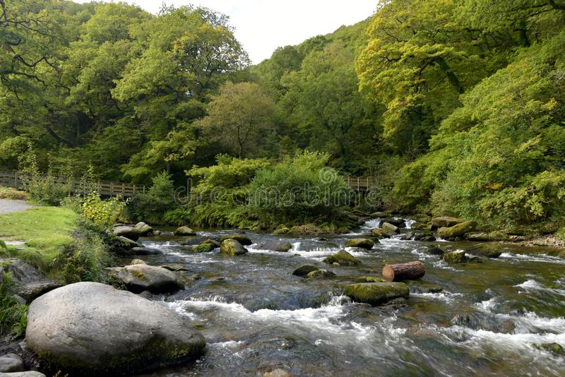 Rivers at Watersmeet, Lynmouth, Exmoor, North Devon. Rivers coming down through forest at Watersmeet, Lynmouth, Exmoor, North Devon royalty free stock image