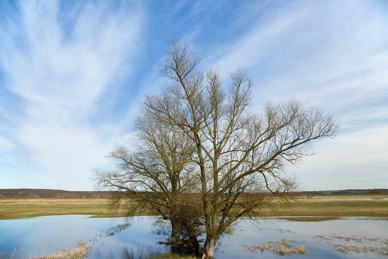 Riverscape με την πλημμύρα στοκ εικόνα με δικαίωμα ελεύθερης χρήσης