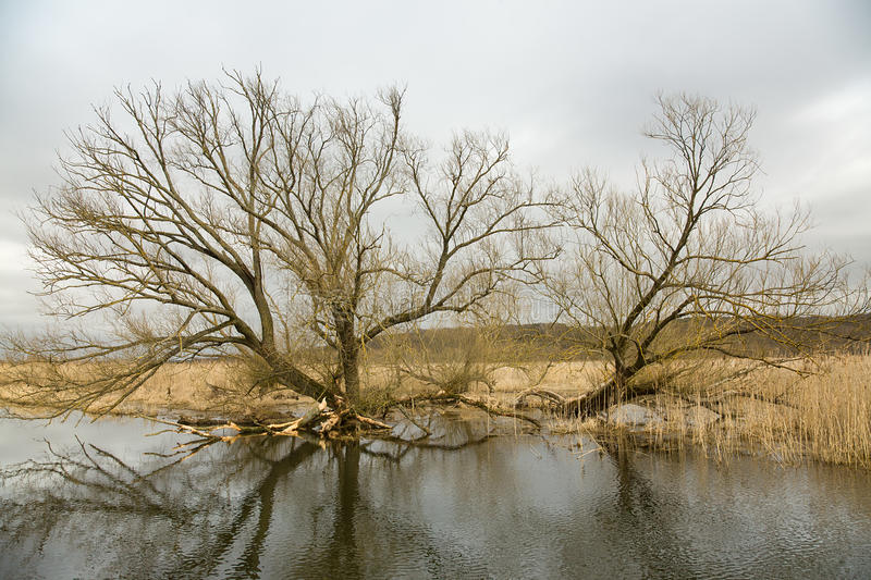 Riverscape with flood royalty free stock images