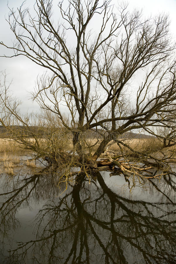 Riverscape med floden arkivbild