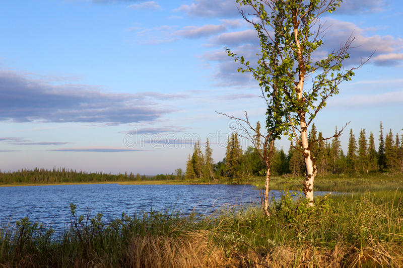 Download Riverside and birch stock image. Image of water, birch - 22938775
