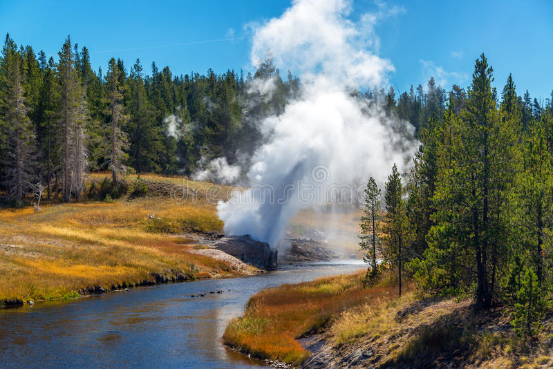 Riverside Geyser Going Off. Riverside Geyser erupting next to the Firehole River in the Upper Geyser Basin in Yellowstone National Park royalty free stock images