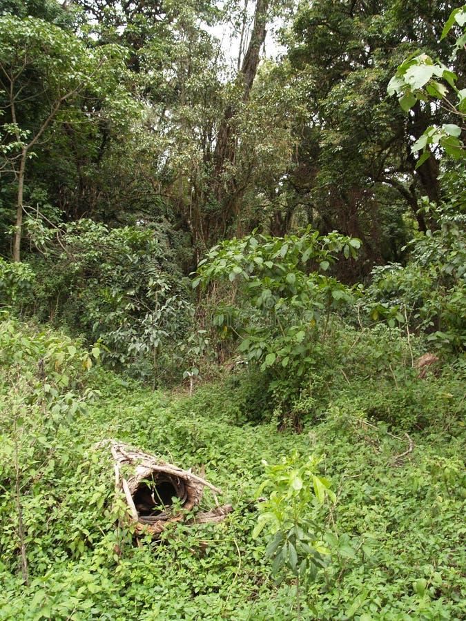Riveste il miele di pannelli nel modo tradizionale in Africa immagini stock