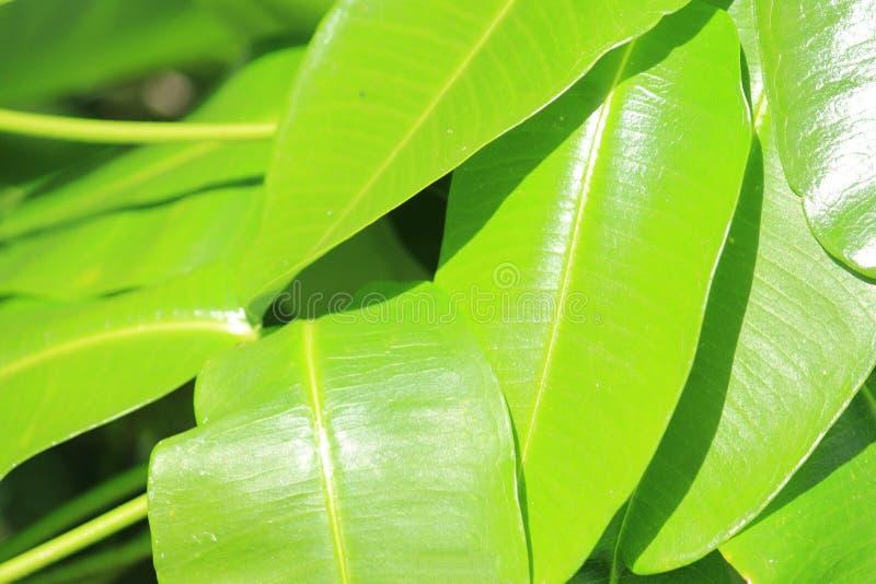 Rivestimento della natura verde fotografie stock