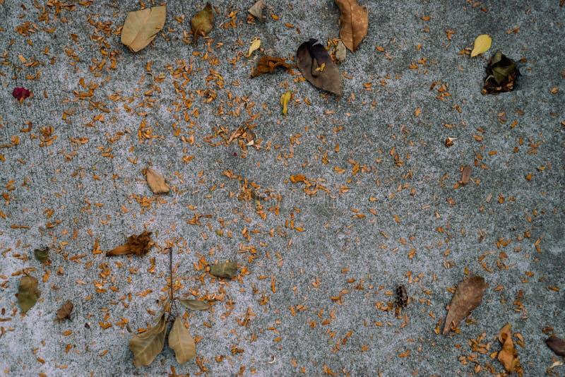 Rivestimento per pavimenti concreto dalle foglie secche fotografia stock