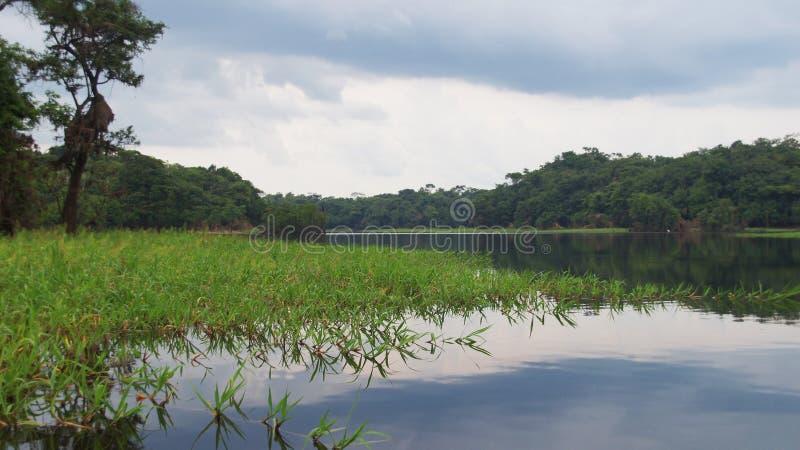 Rivière à la forêt tropicale dans Amazonas, Brésil photos libres de droits