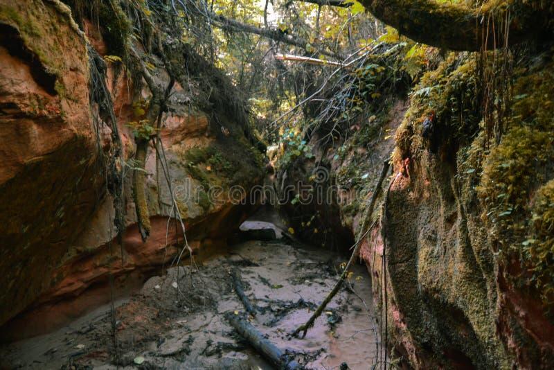 Rivière étroite de forêt entre les cavernes naturellement formées images libres de droits