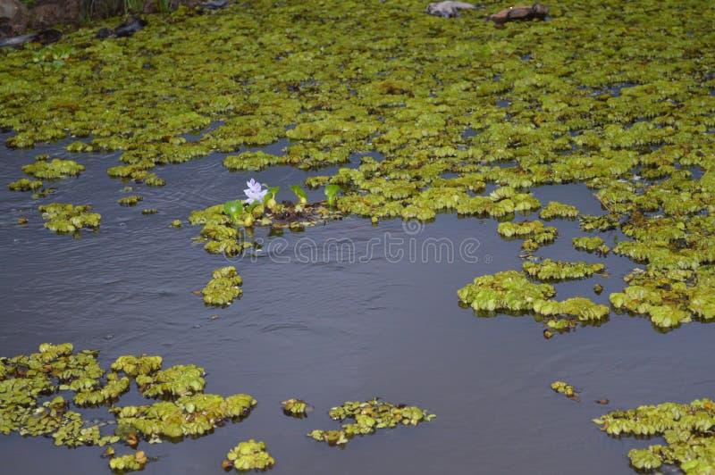 Rivière images stock