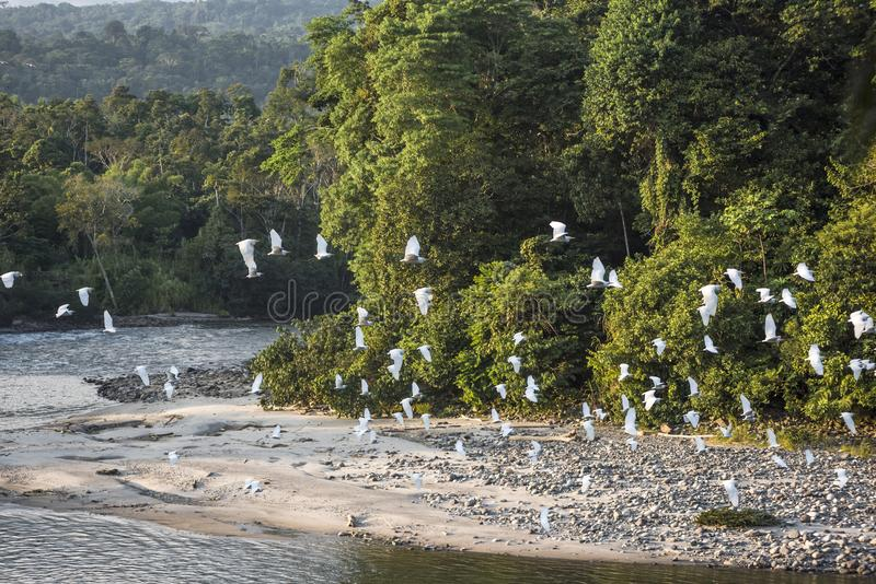 Rivière amazonienne de Misahualli de forêt tropicale l'equateur photographie stock