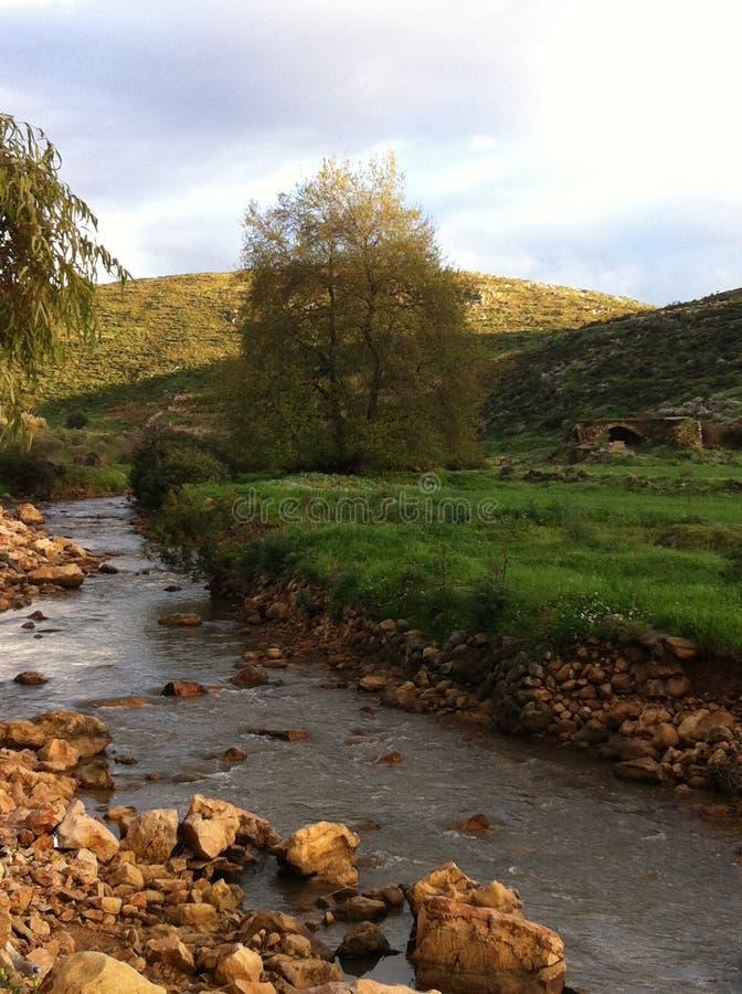 Rivière, arbre, vieux, Liban images libres de droits