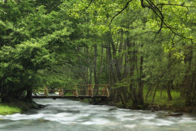 Rivière au printemps