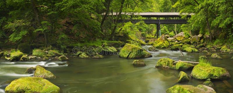 Rivière avec un pont couvert dans une forêt verte luxuriante photos libres de droits