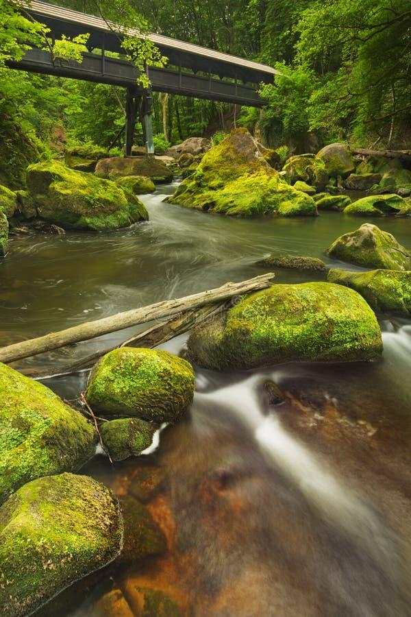 Rivière avec un pont couvert dans une forêt verte luxuriante image stock