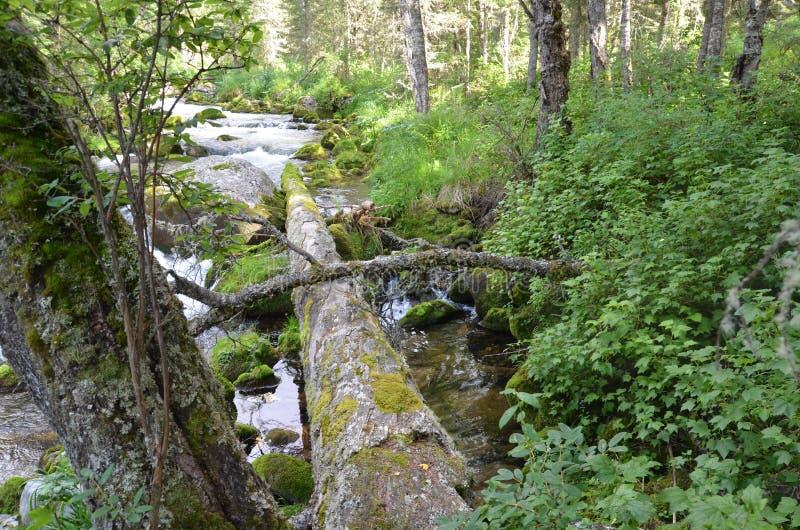 Rivière Batshelak photos libres de droits