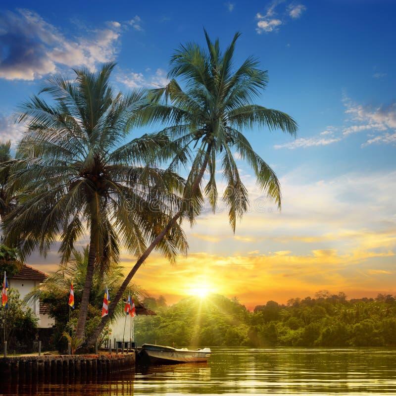 Rivière, beau lever de soleil et paumes photographie stock libre de droits