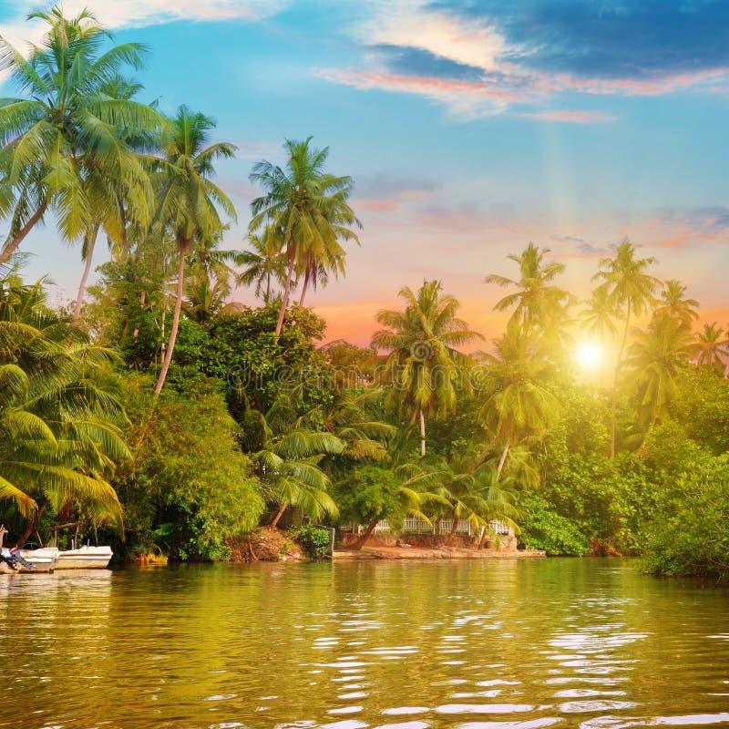 Rivière, beau lever de soleil et paumes image stock