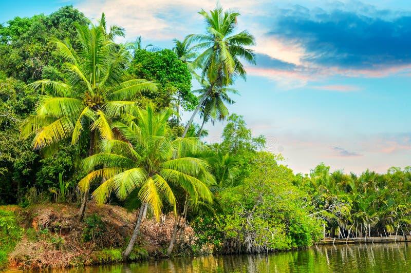 Rivière, belle hausse du soleil et paumes tropicales photographie stock libre de droits