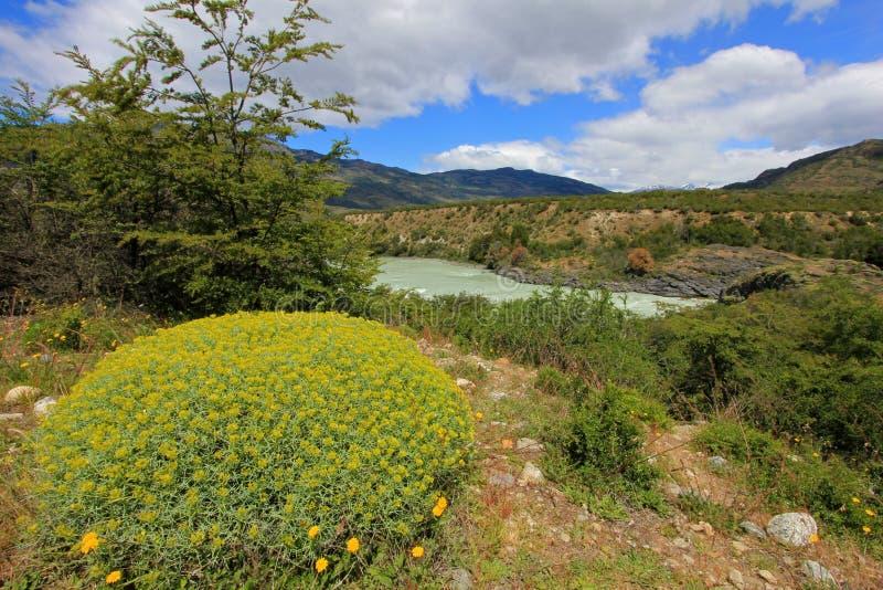 Rivière bleue profonde de Baker, Carretera austral, Chili photos libres de droits