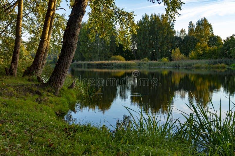 Rivière calme avec des réflexions des arbres environnants photos libres de droits