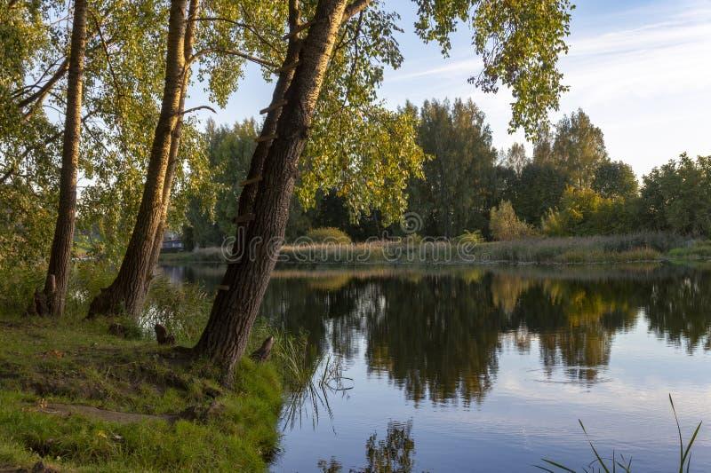Rivière calme avec des réflexions des arbres environnants photographie stock