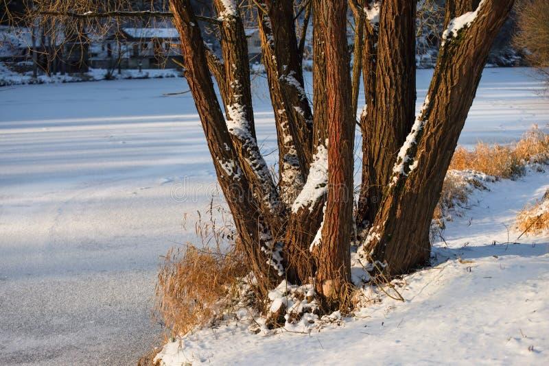 Rivière congelée avec l'arbre photographie stock
