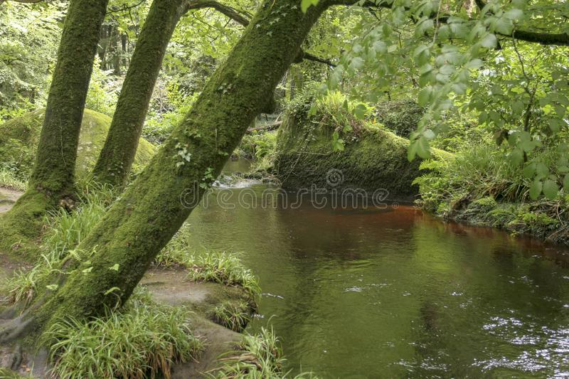 Rivière débordante dans la forêt Huelgoat images stock