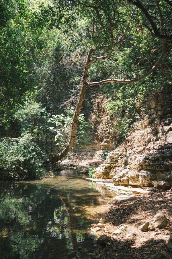 Rivière d'Achziv pendant l'été dans la grande forêt images stock