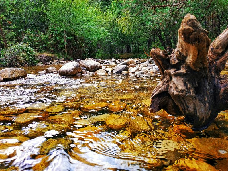 Rivière d'Eresma avec un tronc formé étrange d'un arbre tombé photos stock