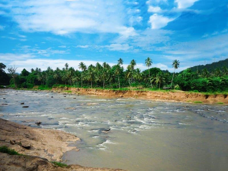 Rivi?re d'Oya dans Sri Lanka, orphelinat d'?l?phant de Pinnawala images libres de droits