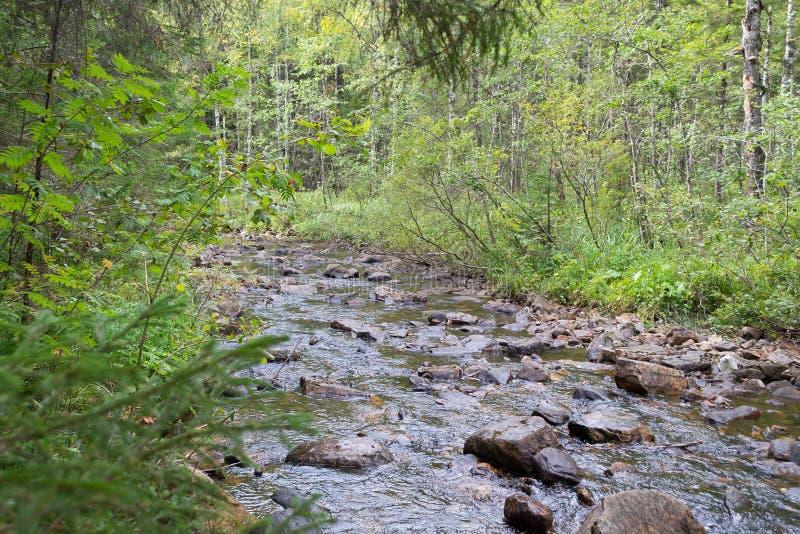 rivière dans la forêt en été grande rivière de tresse en parc national Taganay photo stock