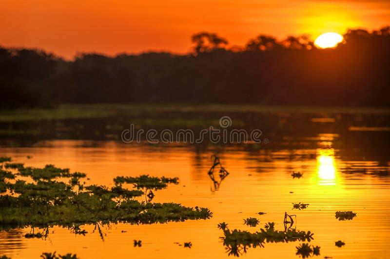Rivière dans la forêt tropicale d'Amazone au crépuscule, Pérou, Amérique du Sud photographie stock