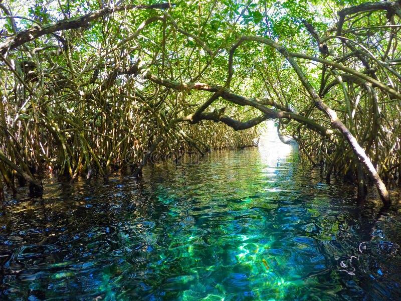 Rivière dans la jungle avec des palétuviers photographie stock