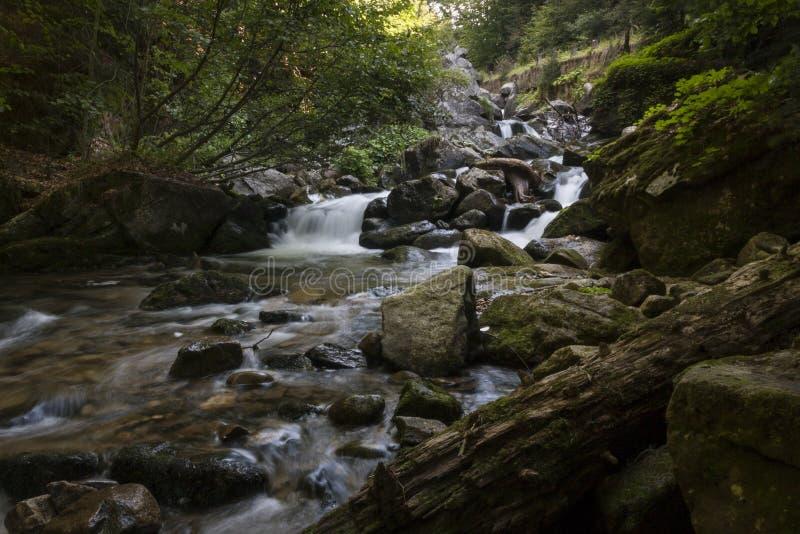 Rivière dans la montagne photo libre de droits