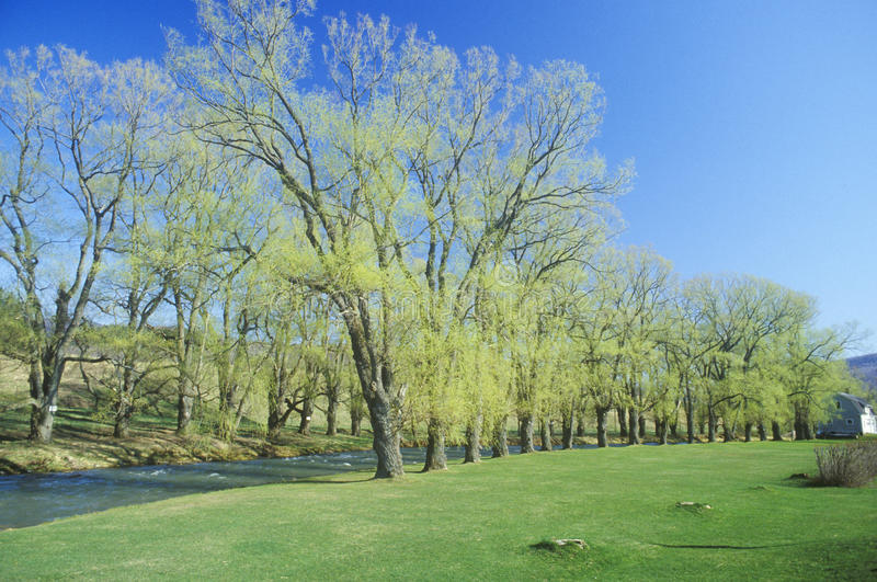 Rivière dans le printemps, Williamstown, le Massachusetts image stock