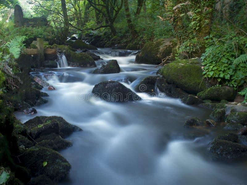 Rivière dans les arbres images stock