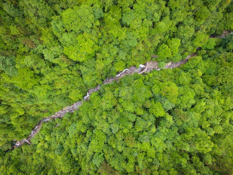 Rivière dans les arbres photographie stock libre de droits