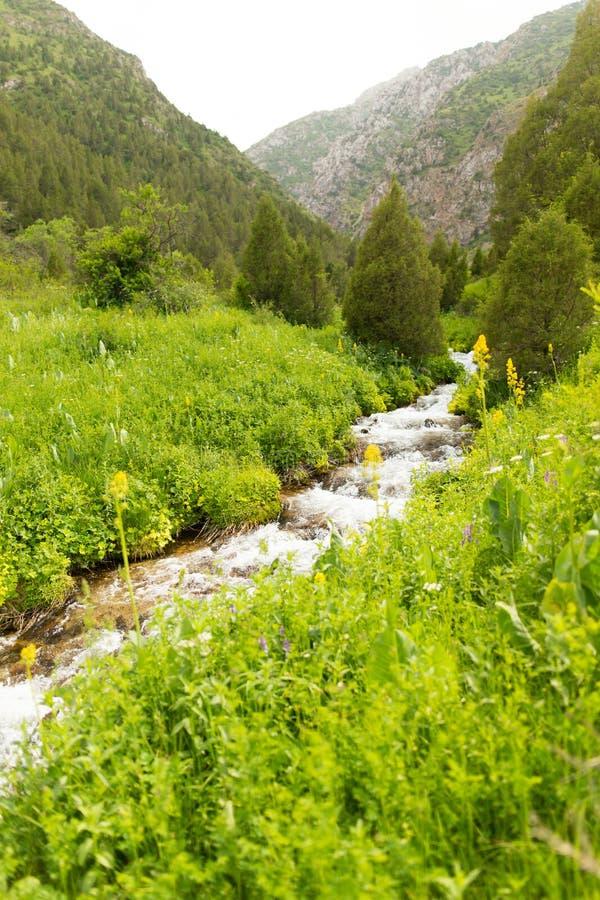 Rivière dans les montagnes de Tian Shan au printemps images libres de droits