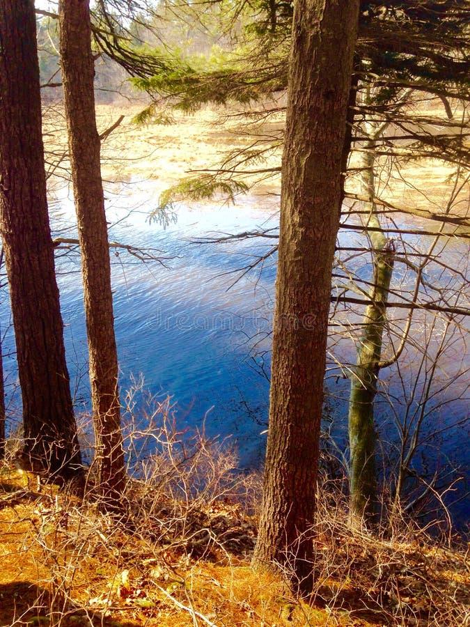Rivière dans une forêt photo libre de droits