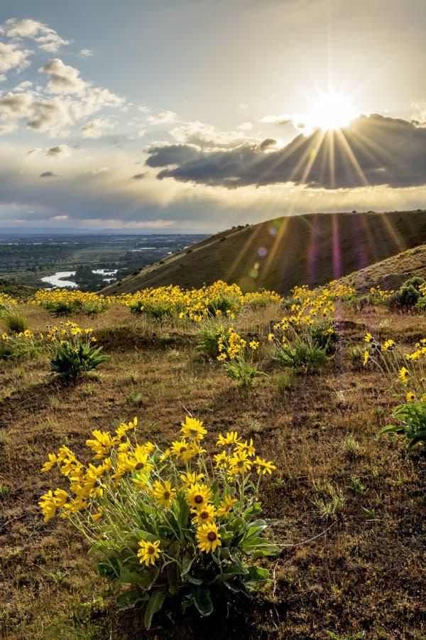 Rivière de Boise au coucher du soleil avec sunstar et des fleurs image libre de droits