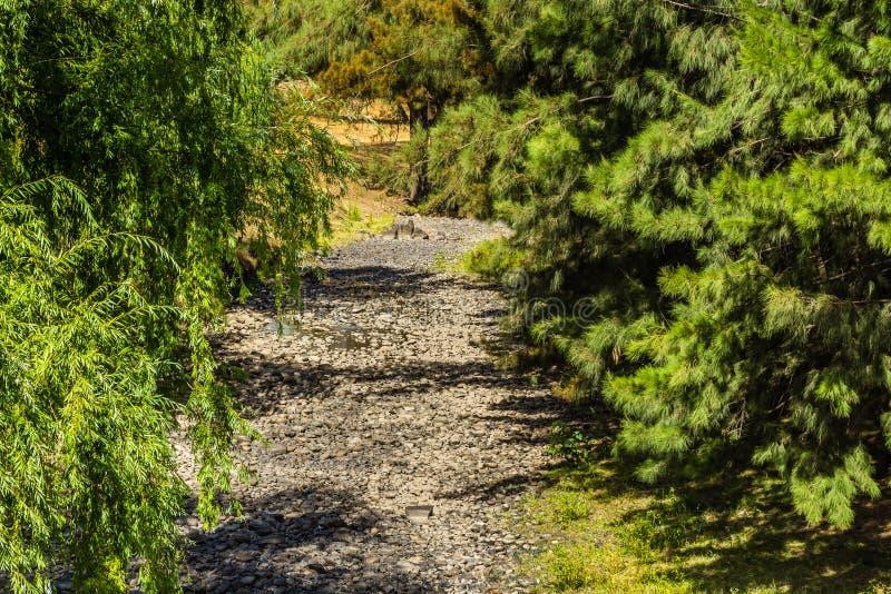 Rivière de chasseur, chasseur supérieur, NSW, Australie images stock