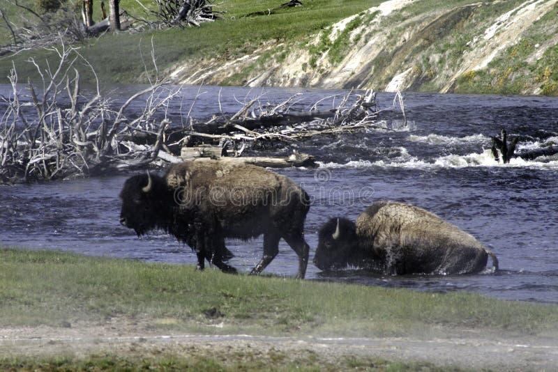 Rivière de croisement de Buffalo photographie stock