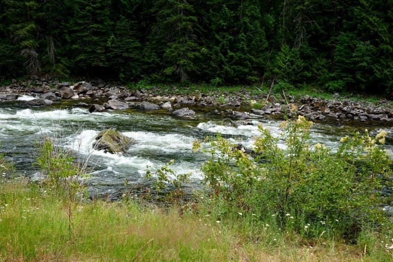 Rivière de Lochsa - Idaho photographie stock libre de droits