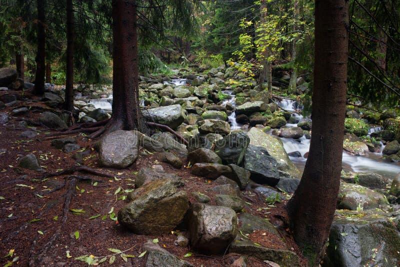 Rivière de Lomnica dans la forêt de montagnes de Karkonosze image libre de droits